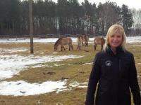 Die Bayerische Umweltministerin Ulrike Scharf hat am Montag, 23. Februar, das bayernweit einzigartige Beweidungsprojekt mit Przewalski-Pferden im Stadtwald Augsburg besucht. Durch den Einsatz der Urwald-Pferde werden die lichten Kiefernwälder, die Heimat zahlreicher gefährdeter Arten wie dem seltenen Kleinen Knabenkraut, erhalten.
