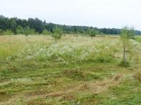 Fachtagung: Landschaftspflege in Bayern: Ökologische Pflege kommunaler Grünflächen. Extensiv genutzte Streuobstwiese in der Gemeinde Emmerting.
