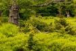 Die Natur im Wandel der Jahreszeiten erleben können die Teilnehmer der Wanderung am 23. Juni zum Großen Falkenstein. (Foto: Steffen Krieger/Nationalpark Bayerischer Wald   –  Freigabe nur in Verbindung mit dem Veranstaltungshinweis)