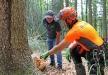 Werner Kaatz, Leiter der Nationalparkdienststelle Riedlhütte (links), und Forstwirtschaftsmeister Michael Lender besichtigen die Schnittstelle einer Tanne, die aufgrund von Fäulnis gefällt werden musste. (Foto: Annette Nigl/Nationalparkverwaltung Bayerischer Wald).
