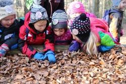 Den Wald mit allen Sinnen erkunden, das gehört in den Ferien zum spannenden Programm der Nationalparkzentren Falkenstein und Lusen. (Foto: Nationalpark Bayerischer Wald)