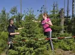 Waldkartierung am Fuße des Lusen: Schüler der Mittelschule Zwiesel, einer von neun Nationalpark-Partnerschulen, nehmen den nachwachsenden Wald genau unter die Lupe. (Foto: Thomas Michler/Nationalpark Bayerischer Wald)