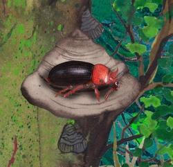"""Um diese Illustration wird das Kinderbuch """"Die wilden 14: Die unglaubliche Reise der Urwaldkäfer im Bayerischen Wald"""" bei der angedachten Neuauflage ergänzt. (Illustration: Susanne Zuda)"""