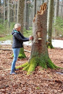 Diana Six von der University of Montana interessiert sich etwa für den Einfluss von Pilzen auf den Borkenkäfer-Kreislauf. (Foto: Gregor Wolf/Nationalpark Bayerischer Wald)