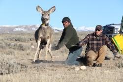 In der Yellowstone-Region hat sich Professor Matthew Kauffmann (links) mit dem Zusammenwirken von Flora, Wild und Wölfen beschäftigt – unter anderem mithilfe von GPS-Halsbändern, die Tieren umgehangen wurden. (Foto: University of Wyoming)