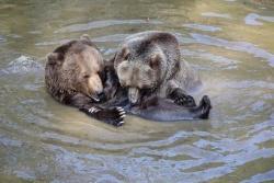 Neben den erwachsenen Tieren Luna und Benny ist im Gehege des Nationalparks auch noch deren  Nachwuchs – Luserl und Ralu – untergebracht. (Foto: Elke Ohland/Nationalpark Bayerischer Wald)