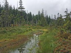 Sichtbarer Erfolg der Renaturierung: Durch das Verschließen der Gräben stieg der Wasserstand im Tieffilz merklich an.  (Foto: Gregor Wolf/Nationalpark Bayerischer Wald)