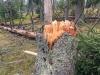 Im Nationalpark Bayersicher Wald wurden nur vereinzelt Bäume niedergerissen. (Foto: Gregor Wolf/Nationalpark Bayerischer Wald