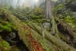 Die vermenschlichende Darstellung des Waldes ist Thema eines wissenschaftlichen Vortrags am Donnerstag, 18. Januar, im Waldgeschichtlichen Museum. (Foto: Thomas Michler / Nationalpark Bayerischer Wald)