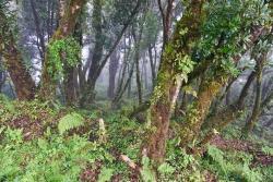 Blick in den Bergnebelwald im Nationalpark Montecristo. (Foto: Franz Leibl/Nationalpark Bayerischer Wald)