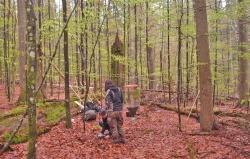 Nachdem die Struktur der Standorte dokumentiert wurde, installierten die Forscher verschiedene Messgeräte, etwa Fenster- und Bodenfallen, um die Artenvielfalt zu untersuchen. (Foto: Jonas Hagge/Nationalpark Bayerischer Wald)