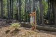 Auf solchen Versuchsflächen werden im Nationalpark Bayerischer Wald unter anderem totholzbewohnende Insekten erforscht. (Foto: Bernhard Huber).