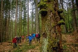 Ein großer Teil des Einführungsseminars bestand aus Outdoor-Aktivitäten rund ums Thema Umweltbildung – wie hier mit Nationalparkmitarbeiter Lukas Laux. (Foto: Philipp Seyfried/Nationalpark Bayerischer Wald)