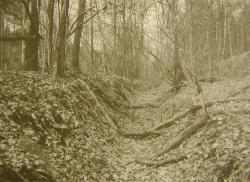 Im Lossnitzer System zwei Kilometer südwestlich von Bergreichenstein ist der heutige Hohlweg-Charakter des Goldenen Steiges auf ca. 1800 Meter Länge noch gut erhalten.Foto: P. Zavřel