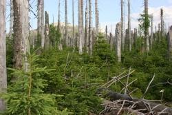 Waldwildnis am Lusen