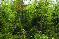 In nur 25 Jahren hat die Natur aus einer ehemaligen Windwurffläche einen stabilen und facettenreichen Wald aufgebaut.