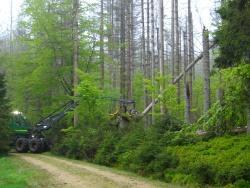 Verkehrssicherung am Neuhüttenweg und Kothstraßl mit einem Havester durch Umdrücken der abgestorbenen Fichten.