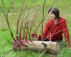 Lebendige Kreativität auch mit Totholz direkt in der Wildnis