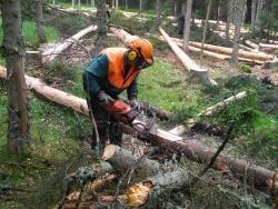 Wenn es die Zeit erlaubt, wird so viel Holz wie möglich motormanuell entrindet und als Biomasse auf der Fläche belassen. Foto: Franz Baierl