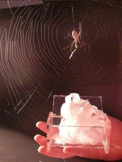 Durch die Erforschung der herausragenden elastischen Eigenschaften von Spinnenseide, gelang es Bionik-Forschern in aufwendigen Prozessen extrem leichtes, aber reißfestes Flies z. B. für Wundverbände mit angenehmen Tragekomfort zu erstellen.