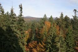 Fichte, Tanne, Buche sind die Hauptbaumarten des Bayerischen Waldes. Gerade auf den sauren, nährstoffarmen Böden ist eine sorgfältige Bewirtschaftung wichtig, um die Vitalität der Wälder beizubehalten.