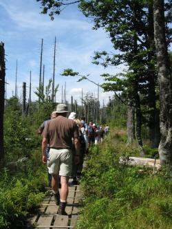 Im Verlauf des Bewerbungsprozesses wird in drei Exkursionen im Nationalpark die neu entstehende Waldwildnis gemeinsam erwandert.