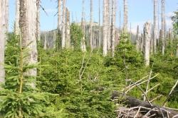 Der Bürgermeister von Prasily/Stubenbach, Libor Pospisil, und die meisten seiner Gemeinderäte stehen positiv zu einem Nationalpark mit wilder Natur ohne Eingriffe und sehen die Waldentwicklung im Rachel-Lusengebiet als Vorbild.
