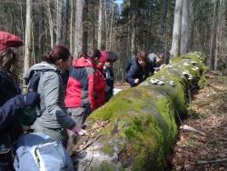 Tschechische Forststudenten im Nationalpark: Hier bewundern sie im Urwaldrelikt Watzlikhain die seltene Lungenflechte auf einer am Boden allmählich vermodernden Riesenbuche.