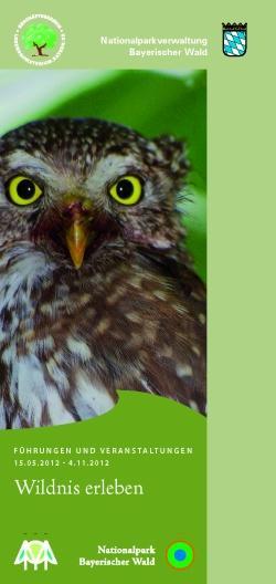 Das Portrait eines Sperlingskauzes, der kleinsten Eule Europas, ziert das neue Veranstaltungs- und Führungsprogramm des Nationalparks Bayerischer Wald in diesem Sommerhalbjahr