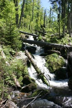 Bergbach im Nationalpark Bayerischer Wald