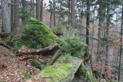 Die Nationalparkphilosophie Natur Natur sein lassen wird im ehemaligen Naturschutzgebiet Johannisruh in teils spektakulären Waldbildern vor Augen geführt