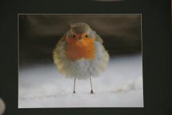 """Der 1. Preis ging mit dem """"Rotkehlchen"""" an Otto Samwald. Im Gegensatz zu den meisten Singvogelarten singen bei den Rotkehlchen auch die Weibchen, aber nur im Winter. Bei Schnee und Eis dient der schluchzende Gesang mit seinen perlenden Tönen und Trillern dazu, sich ein Revier zu sichern."""