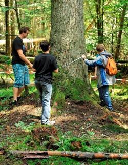 Wie dick ist wohl diese alte Tanne? Schüler des Gymnasiums Zwiesel bei der Vermessung von Waldstrukturen im Nationalpark
