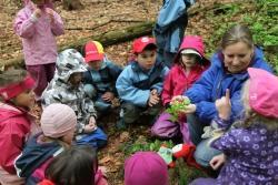 """Die Kindergartenkinder zeigen Nationalparkmitarbeiterin Nicole Graf, was sie alles auf dem Waldboden gefunden haben. Mit dabei ist auch immer """"Willi Waldwichtel""""."""