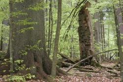 Über den Wert alter Bäume erfuhr man Interessantes im Nationalpark Bayerischer Wald