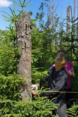 Wie entwickeln sich die Bergfichtenwälder des Nationalparks? Schüler der Mittelschule Zwiesel bei der Vermessung und Kartierung von Waldstrukturen
