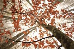 2. Preis: Erika Poltronieri  Herbstwald im NebelHartnäckiger Nebel hat diesen Herbstwald in Italien fest im Griff. Doch ein Blick nach oben offenbart eine erfreuliche Aussicht: Sonnenstrahlen durchbrechen das dichte Grau und tauchen das leuchtende Herbstlaub in ein geradezu magisches Licht