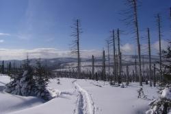 """""""Nationalpark aus erster Hand"""" - auf Langlaufskiern oder mit Schneeschuhen zusammen mit Nationalpark-Mitarbeitern die Winterwälder erkunden."""