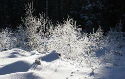 """Naturerlebnis, Fachinformationen und spirituelle Impulse: Auch diesen Winter werden neue Führungen in der Reihe """"Nationalpark und Schöpfung"""" angeboten. (Foto: NPV)"""