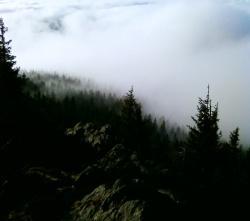 In unbewirtschafteten Naturwäldern können Wolken zu unerwünschtem Eintrag von düngenden Stickstoffverbindungen führen. (Foto: NPV Bayerischer Wald)