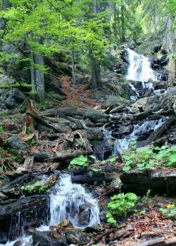 """Beeindruckende Naturerlebnisse, Fachinformationen und spirituelle Impulse machen die Reihe """"Nationalpark und Schöpfung"""" zu einem besonderen Erlebnis. (Foto: NPV Bayerischer Wald)"""