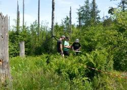 Lusenexkursion der Mittelschule Zwiesel: Die Klasse 8a erforschte ehemalige Borkenkäferflächen und ermittelt u.a. die Zahl der nachwachsenden Jungbäume. (Fotos: NPV Bayerischer Wald)