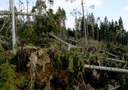 Chaos nach Kyrill – Wie sieht ein solcher Windwurf nach gut sieben Jahren natürlicher Waldentwicklung aus? Antwort auf diese Frage gibt die Windwurfführung mit einem Nationalparkranger. (Foto: NPV Bayerischer Wald)