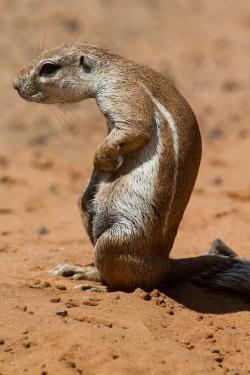 Vielfältig, fremdartig und faszinierend: Naturbeobachtungen in Namibia, die jetzt in der neuen Fotoausstellung im Hans-Eisenmann-Haus zu entdecken sind.