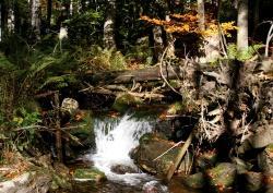 """Wer malerische Herbststimmung am Sagwasser genießen und viel Wissenswertes über frühere Zeiten erfahren will, der sollte sich die Führung """"Koide Supp'n-Zeit"""" nicht entgehen lassen."""