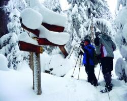 Nicht nur bei Touristen beliebt: Die weit überwiegende Mehrheit der Einheimischen ist der Auffassung, dass der Nationalpark Bayerischer Wald die Lebensqualität in der Region erhöht – und das zu jeder Jahreszeit. (Fotos: NPV Bayerischer Wald)