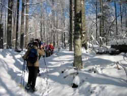 Lust auf das Abenteuer Schneeschuhwanderung? Das neue Winterprogramm bietet zahlreiche kostenlose Regel- und Sondertouren an.