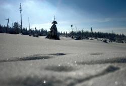 Winter! Sonnenglitzernder Schnee beim Schachtenhaus im Nationalpark Bayerischer Wald.(Foto: Michael Pscheidl / Nationalpark Bayerischer Wald)
