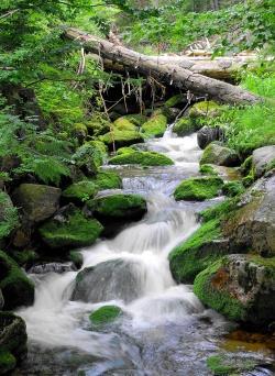 Nicht nur landschaftlich ein Juwel: Die Bergbachsysteme im Nationalpark Bayerischer Wald haben sich als Lieferant von dauerhaft ausgezeichneter Trinkwasserqualität erwiesen, unabhängig von Borkenkäferdynamik im Einzugsgebiet.