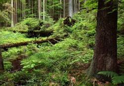 Der Nationalparkwald birgt viele Geheimnisse – beim Pfingstferienprogramm werden sie erforscht vielleicht ja auch gelüftet. (Foto: Rainer Simonis)